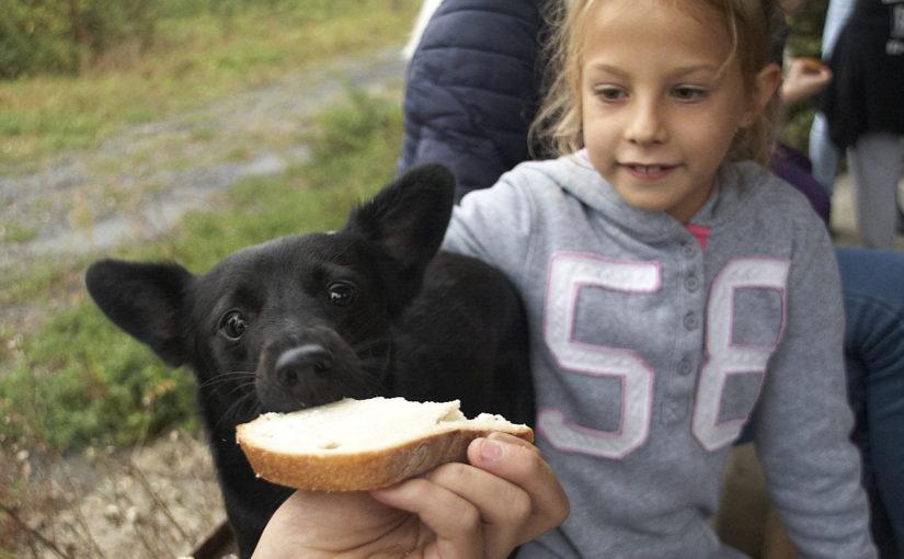 Állatok világnapja, séta az állatokért Szombathelyen