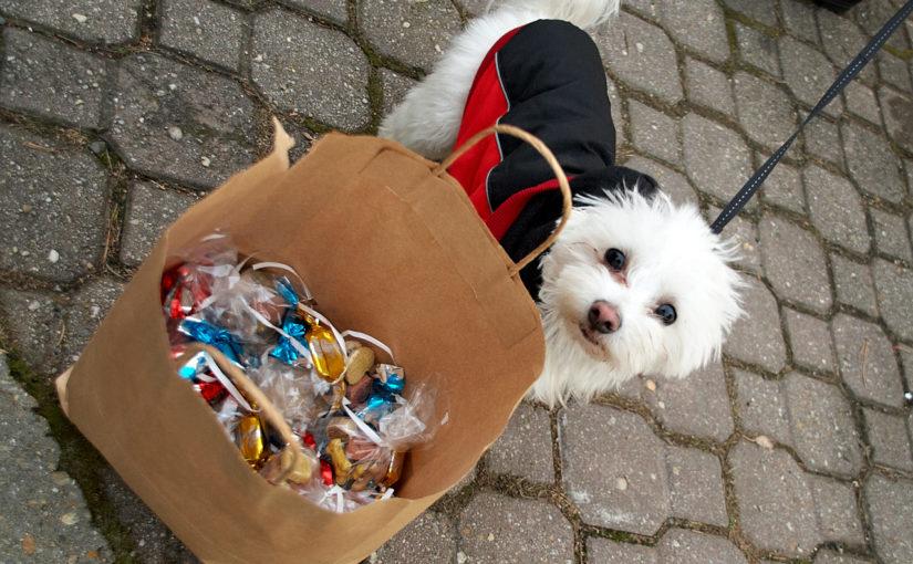 Mikulás napi kutyaséta az állatvédőkkel