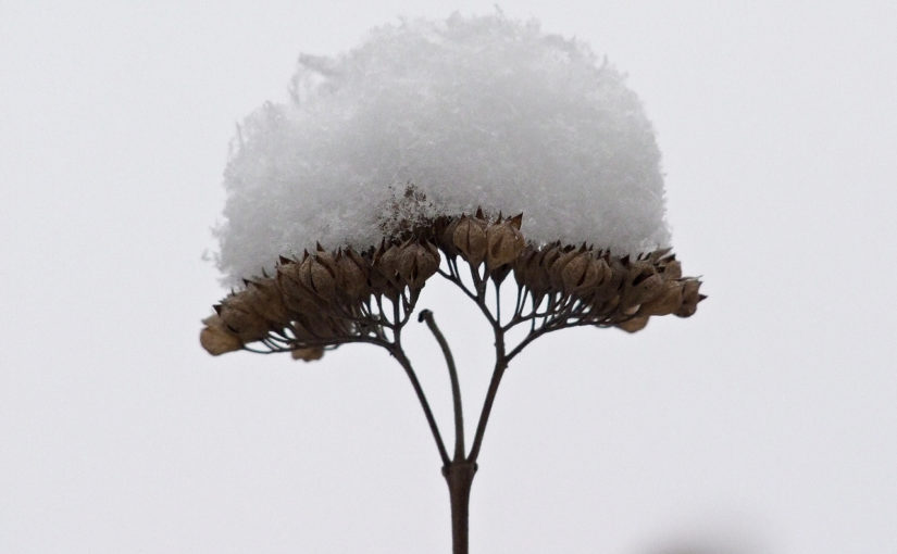 A 2017-es év első havas pillanatai