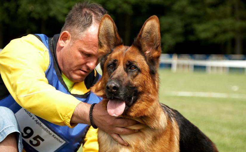 Németjuhász kutyák találkozója és versenye Kőszegfalván